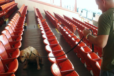Drug dog and K9 handler searching a stadium